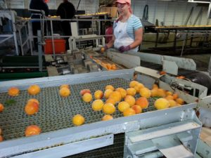 conveyor belt - food processing